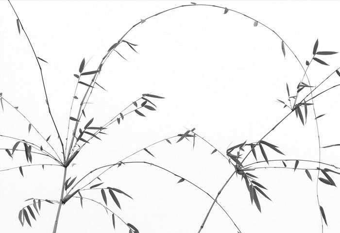 Dede Lusk, Bamboo Study 1