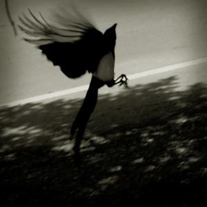 Bird by David Armentor