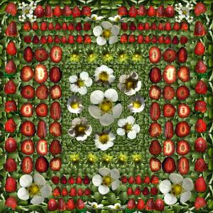 Strawberry Womb by Muffin Bernstein