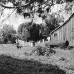 Laurel Valley Washday by Ed Hammerli