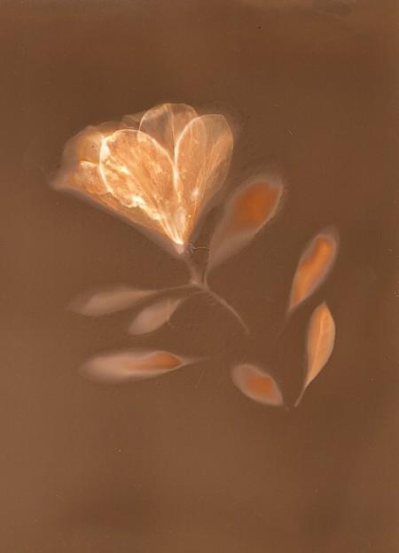 Azalea and Leaves by Natasha Sanchez