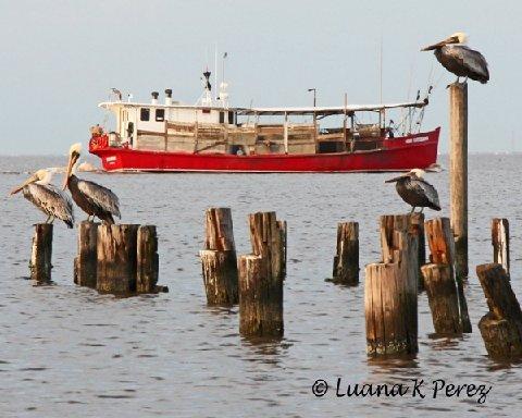 Oyster Boat,Lake Ponchartrain by Luana Perez