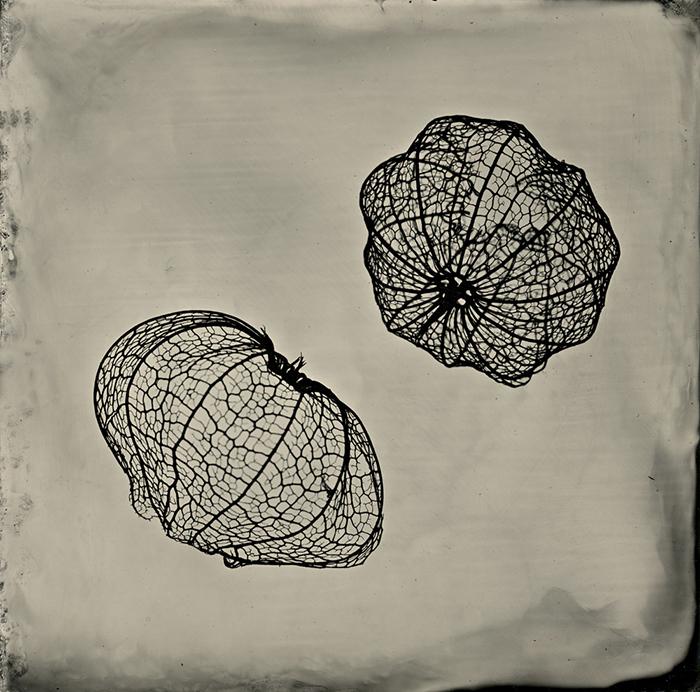 Orbit by S. Gayle Stevens