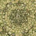 Okra Pattern by Patricia Bernstein