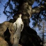 Philip Gould: Real Evangeline Oak, St. Martinville