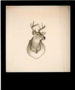 David McCarty - Melpomene Deer