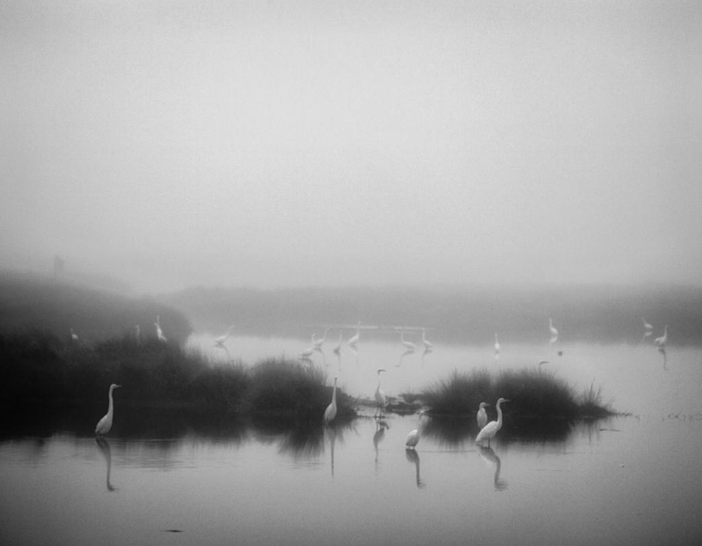 Dean Cavalier -  from the series Marsh Fog