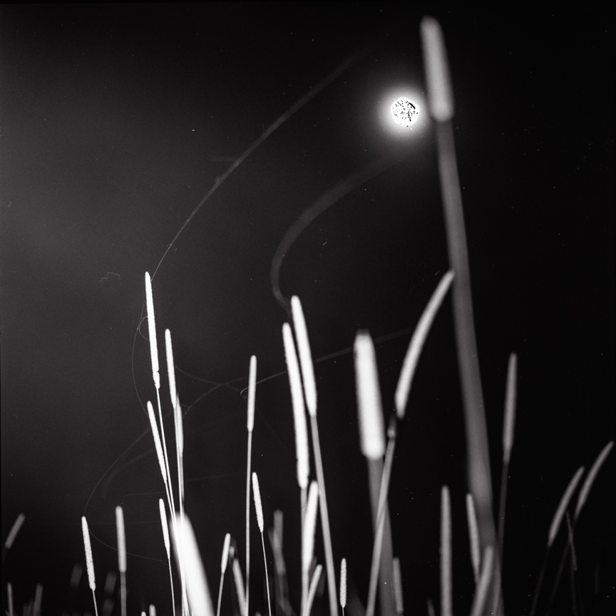 Michael Donnor - Rye Grass