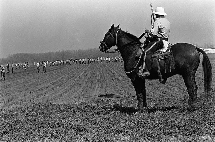 Keith Calhoun - Angola Boss on the Horse, 2014