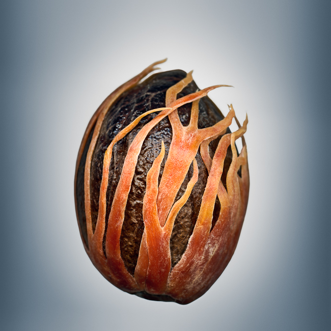 Svjetlana Tepavcevic - Means of Reproductions no. 807, MYRISTICA FRAGRANS (nutmeg with mace)