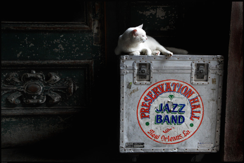 Louis Sahuc - Preservation Hall Cat