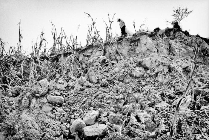 Matt Black - Harvesting a wrecked cornfield. Santiago Mitlatongo, Mexico