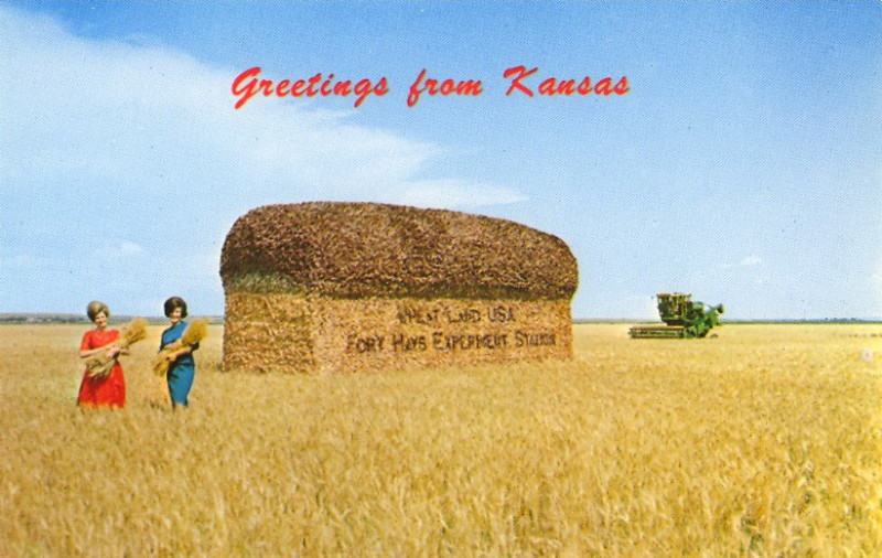 vintage postcard - greetings from kansas