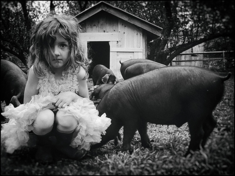 Kathryn Oliver - Vera And The Pigs, 2015