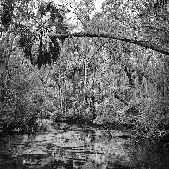 Benjamin Dimmitt - Upper Crawford Creek