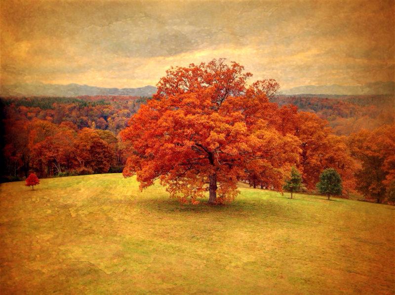 Karen Klinedinst - The Red Tree
