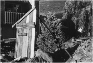 Gary Metz untitled, from Quaking Aspen: A Lyric Complaint