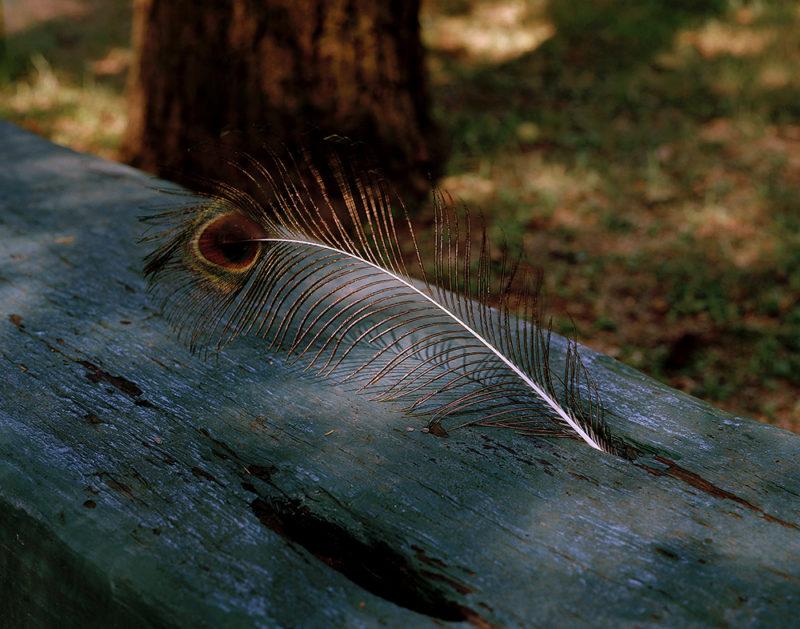 Rachel Boillot - Peacock Feather | Moon Shine: Photographs of the Cumberland Plateau | PhotoNOLA 2018