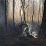Jane Fulton Alt - Smoking Log | PhotoNOLA 2018 Collectors Club Print