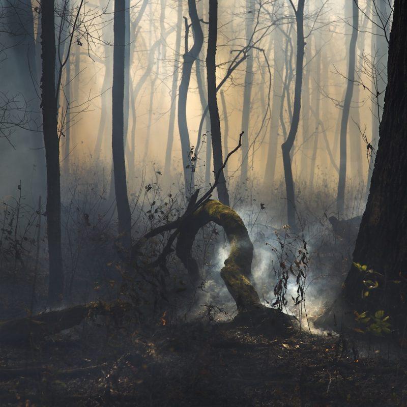 The Smoking Log, 2014 - Jane Fulton Alt | PhotoNOLA 2018 Collectors Club Print
