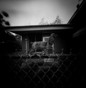 David Armentor - Hurricane Fence