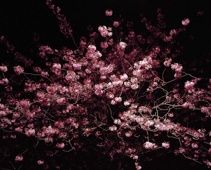 ©Gareth McConnell - A Hypo Full of Love | Night Flowers (London VII) 2005